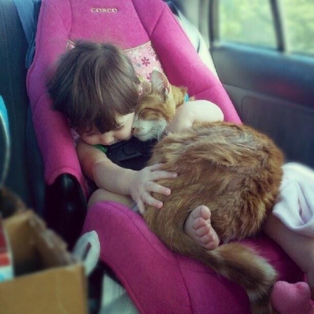 Un chat utilisant  la chaleur d'un enfant pour son confort personnel