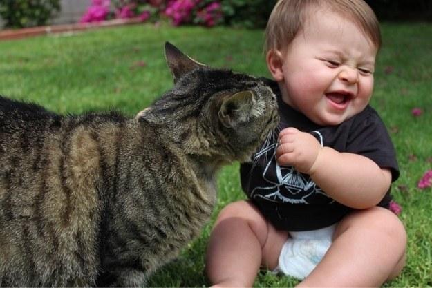 Les chats étudient notre comportement dès notre naissance afin d'apprendre à nous manipuler.