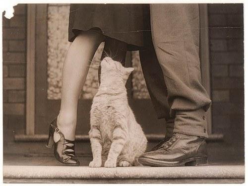 Le chat, ce pervers vicieux.