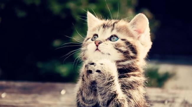 chat-trop-mignon