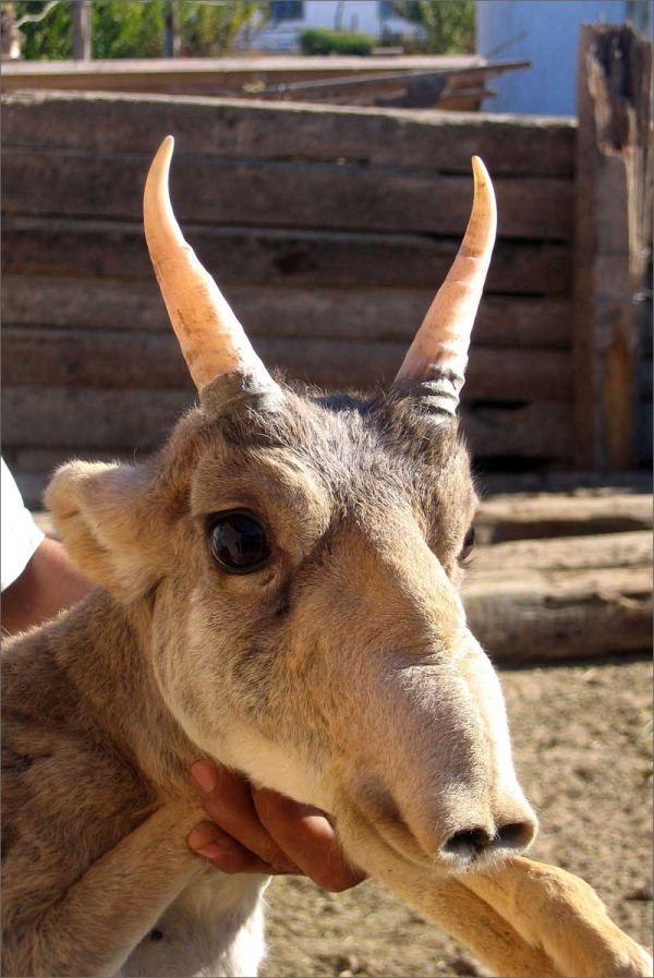 saiga enews.fergananews.comarticles2677