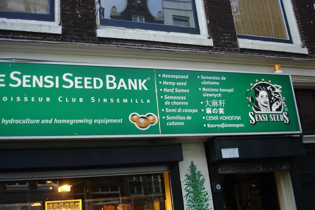 Au Pays-Bas, Sensi Seeds à quignon sur rue