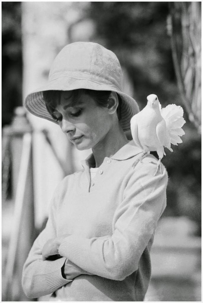 audrey hepburn colombe